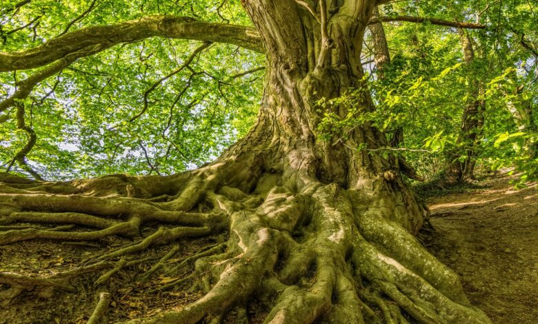 Image of a tree and its roots